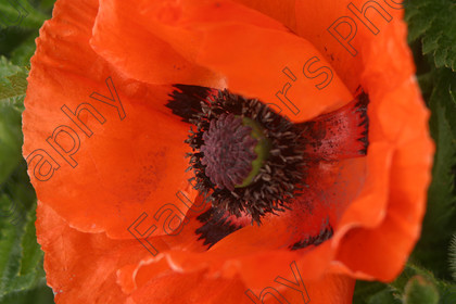 IMG 1216 